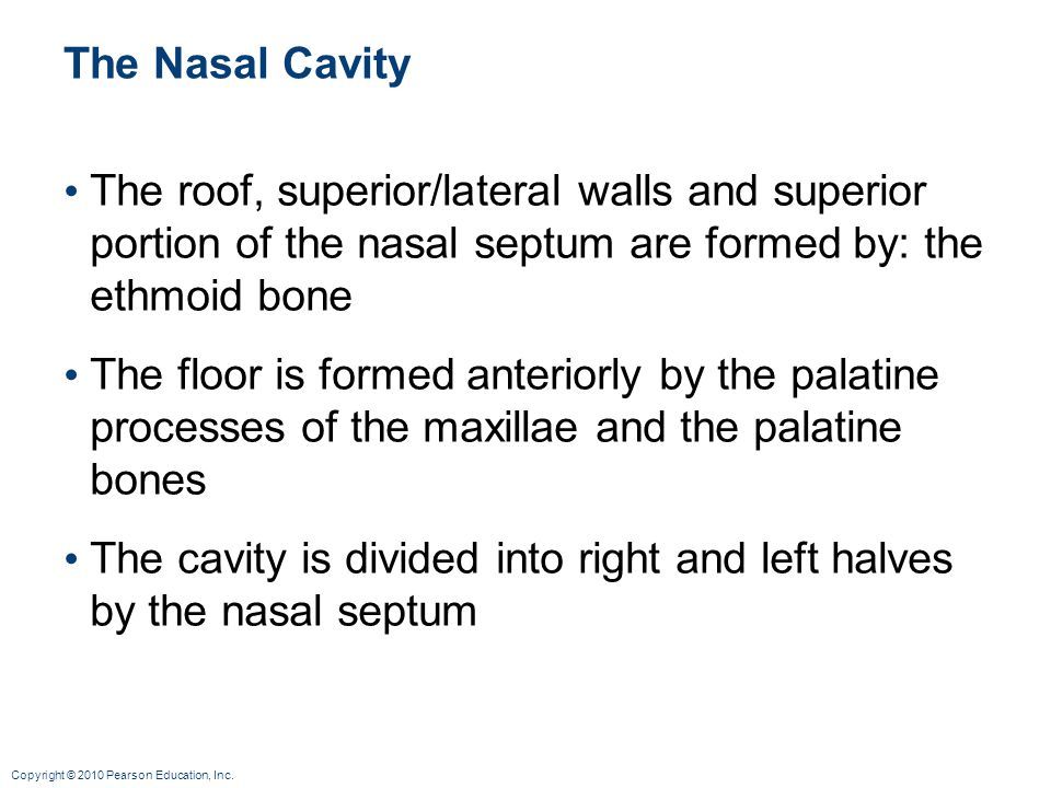 The Nasal Cavity The roof, superior/lateral walls and superior portion of the nasal septum are formed by: the ethmoid bone.