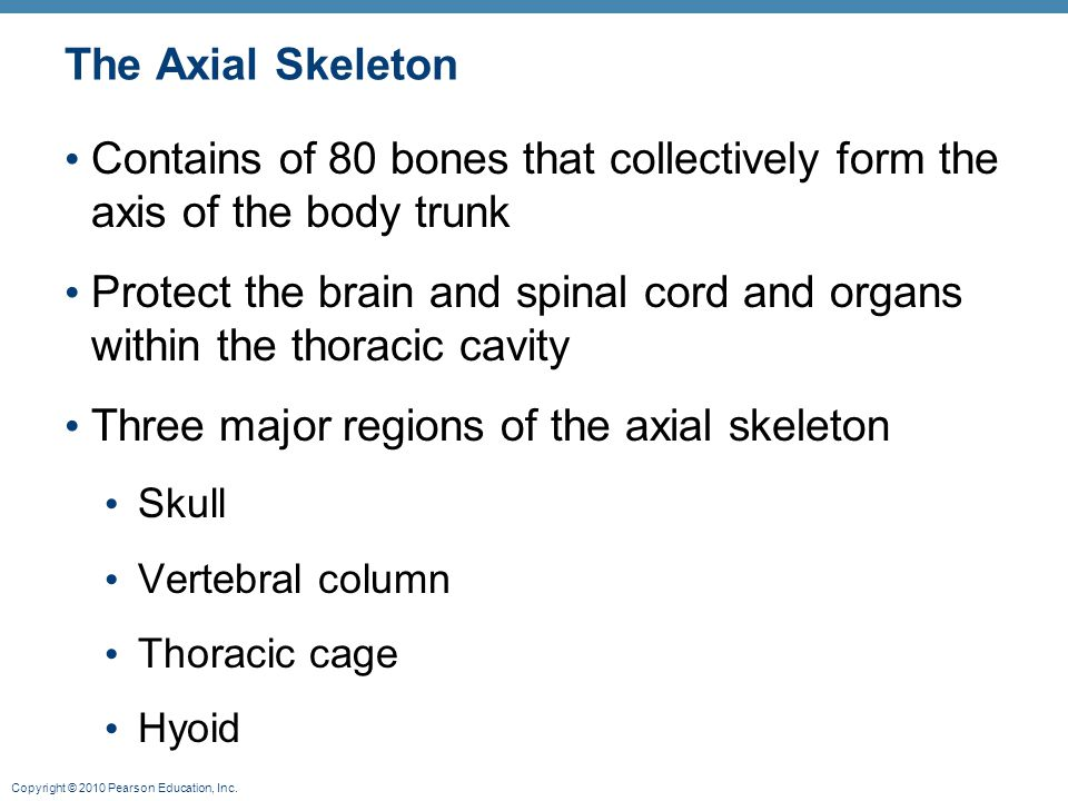 Contains of 80 bones that collectively form the axis of the body trunk
