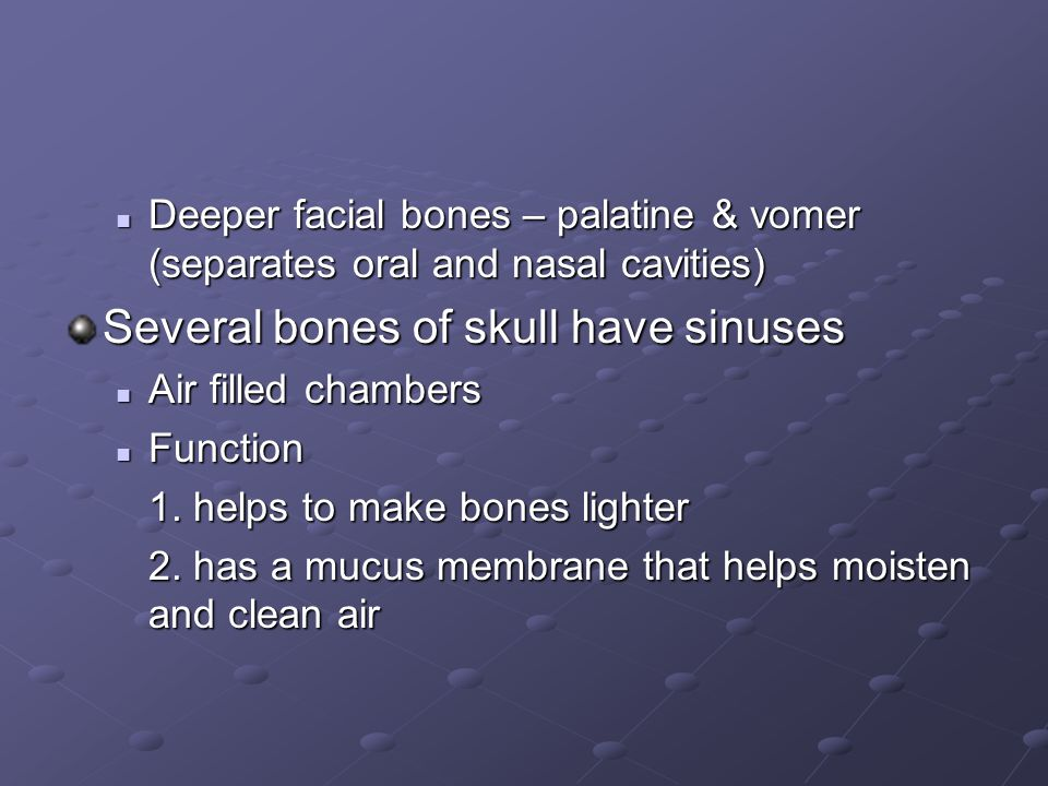 Several bones of skull have sinuses