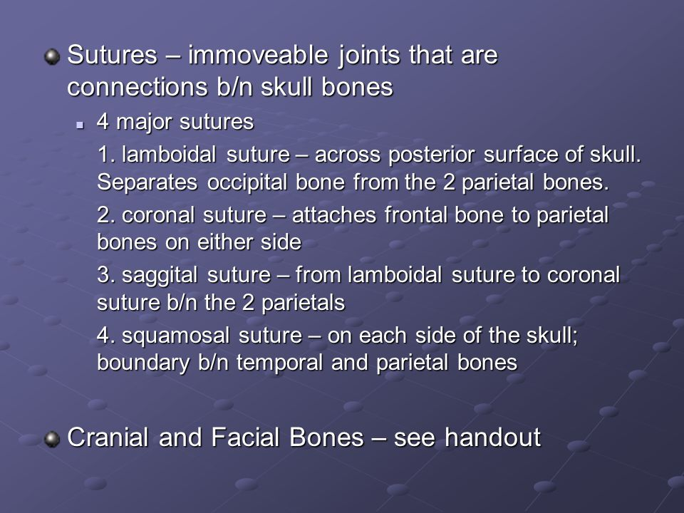 Sutures – immoveable joints that are connections b/n skull bones