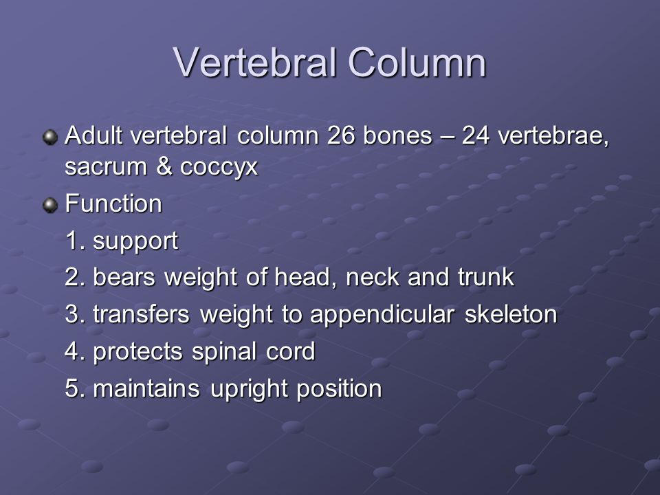 Vertebral Column Adult vertebral column 26 bones – 24 vertebrae, sacrum & coccyx. Function. 1. support.