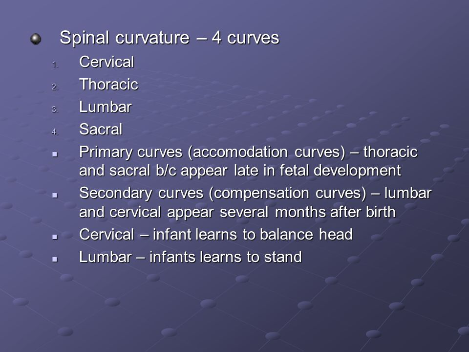 Spinal curvature – 4 curves