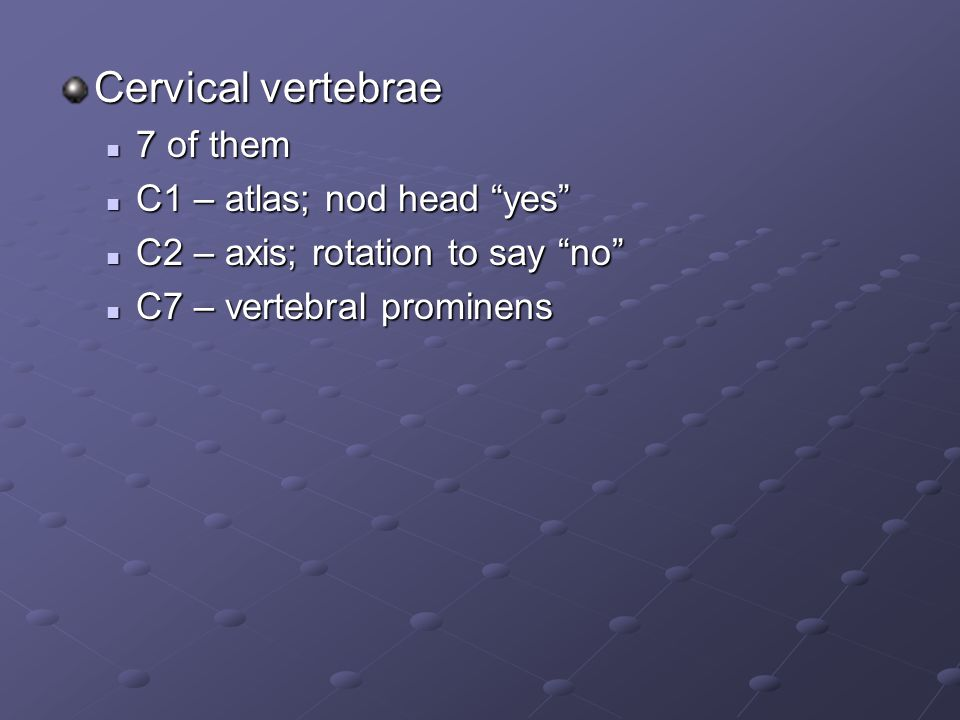 Cervical vertebrae 7 of them C1 – atlas; nod head yes