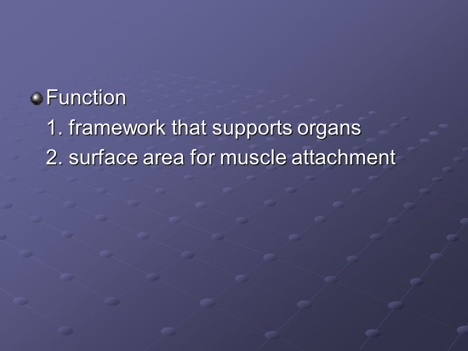 Function 1. framework that supports organs 2. surface area for muscle attachment