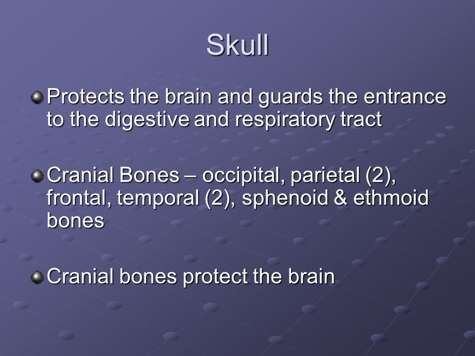 Skull Protects the brain and guards the entrance to the digestive and respiratory tract.