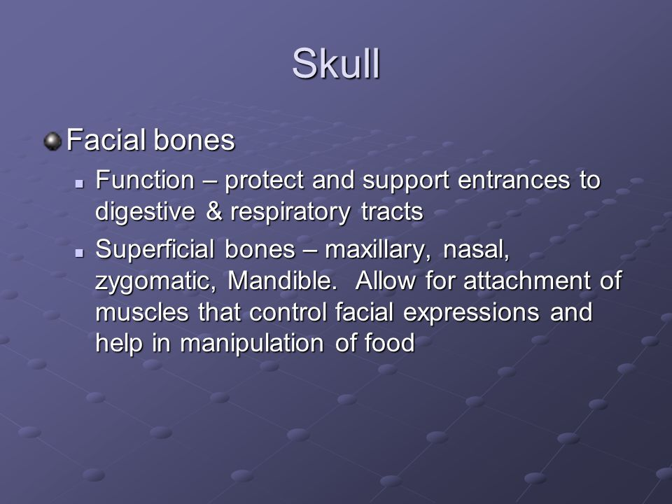 Skull Facial bones. Function – protect and support entrances to digestive & respiratory tracts.