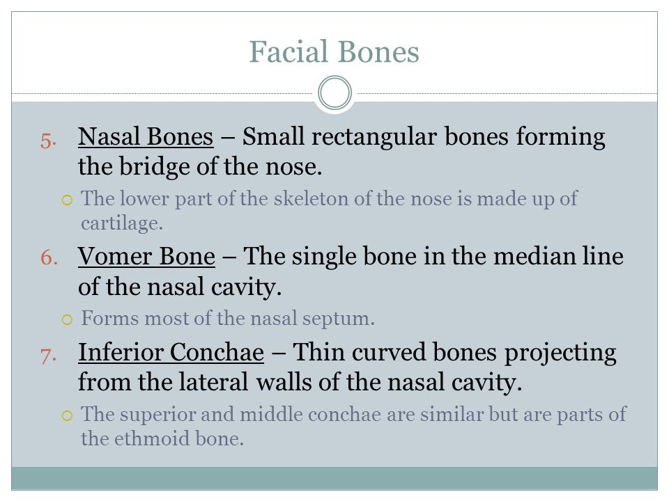 Facial Bones Nasal Bones – Small rectangular bones forming the bridge of the nose.