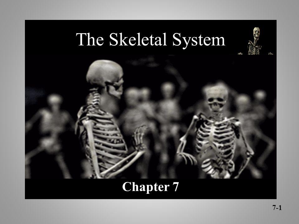 The Skeletal System Chapter 7 7-1