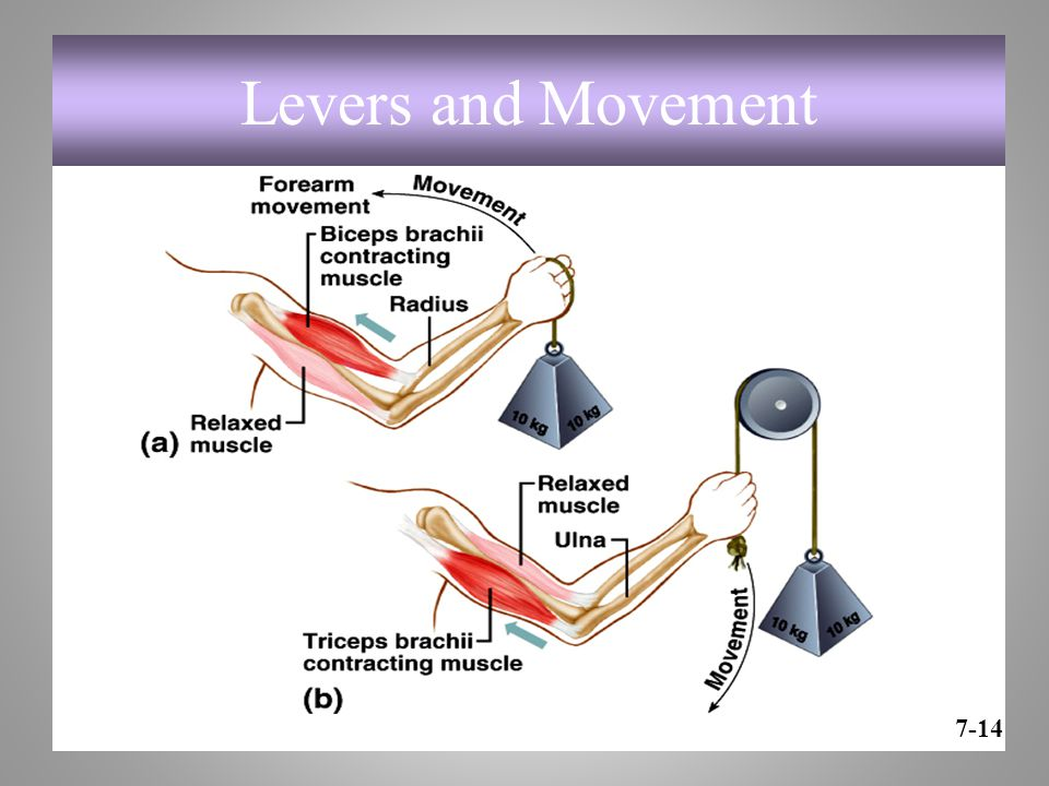 Levers and Movement 7-14