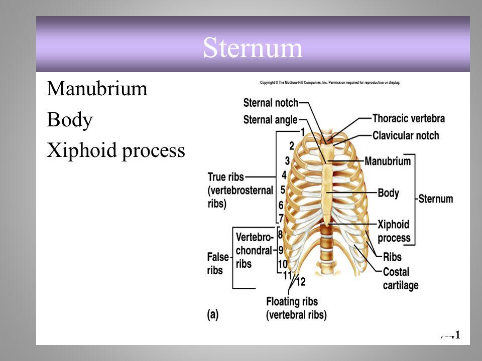 Sternum Manubrium Body Xiphoid process 7-41