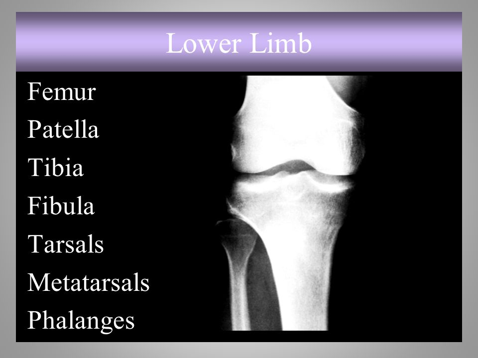 Lower Limb Femur Patella Tibia Fibula Tarsals Metatarsals Phalanges