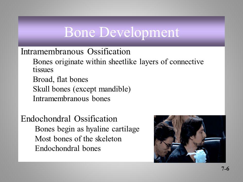 Bone Development Intramembranous Ossification