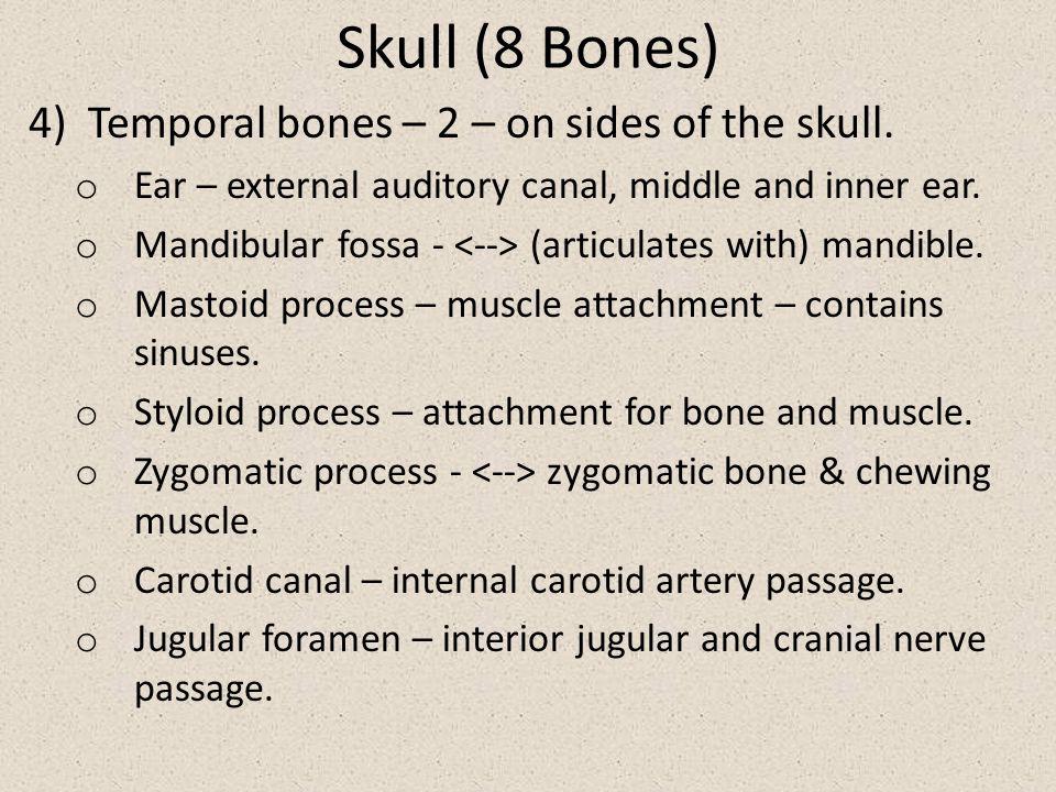 Skull (8 Bones) Temporal bones – 2 – on sides of the skull.