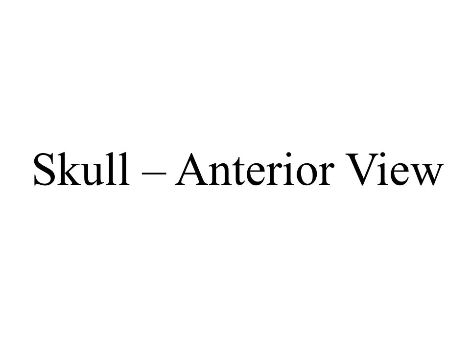 Skull – Anterior View
