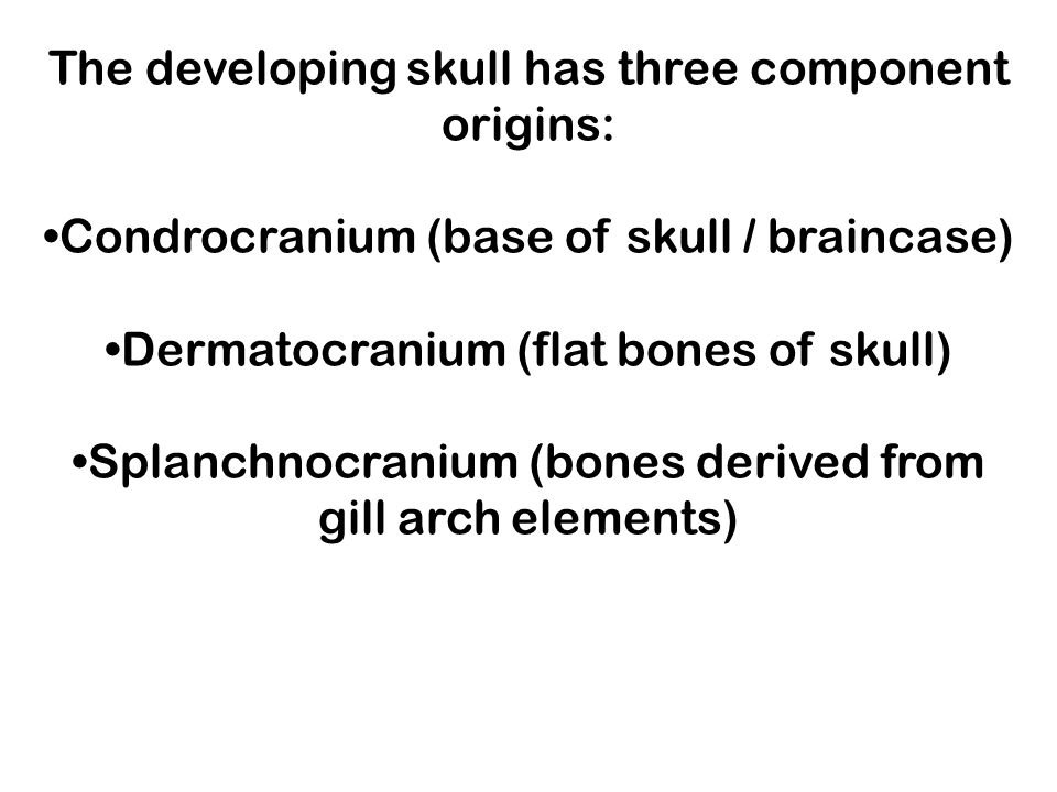 The developing skull has three component origins: