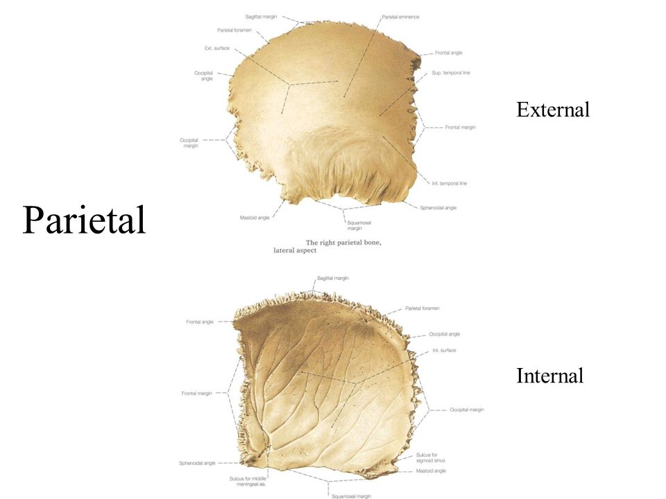 External Internal Parietal