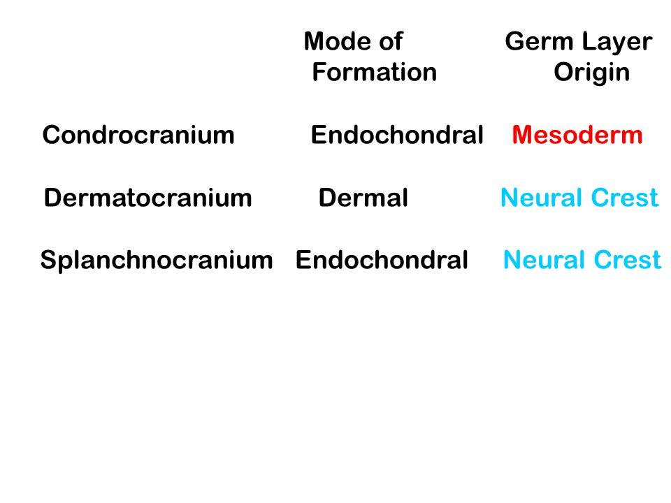 Condrocranium Endochondral Mesoderm Dermatocranium Dermal Neural Crest