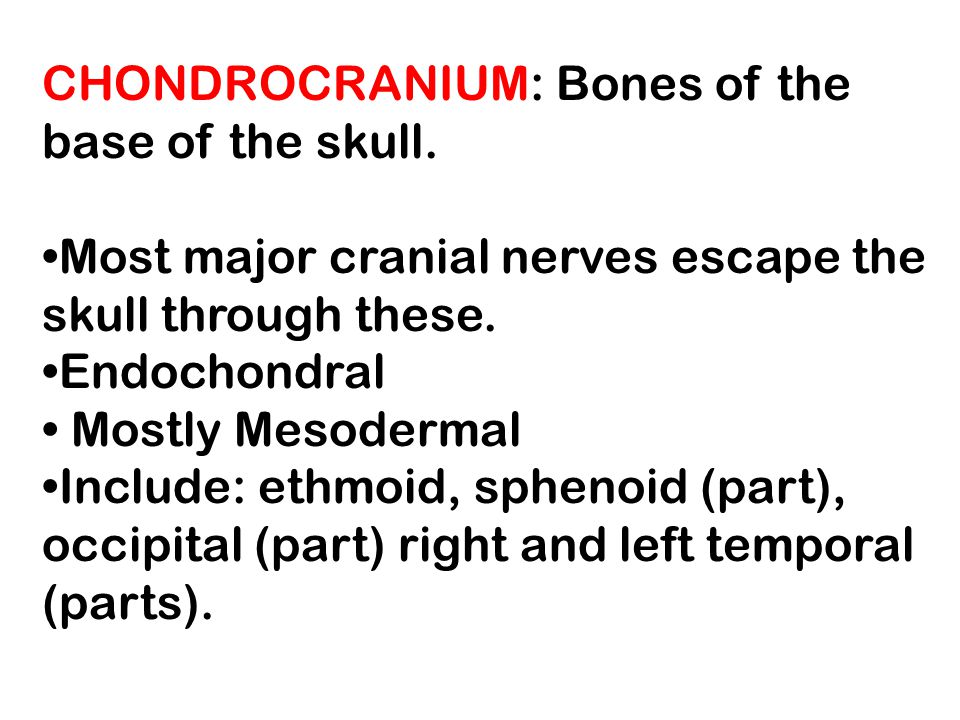 CHONDROCRANIUM: Bones of the base of the skull.
