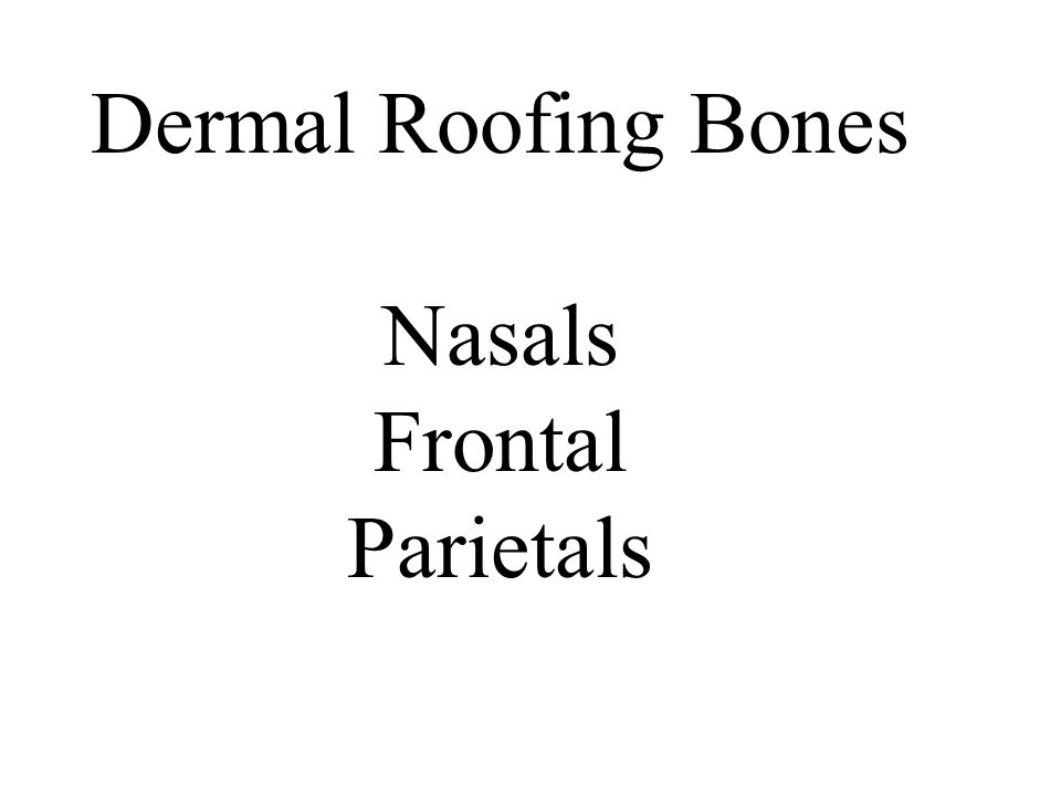 Dermal Roofing Bones Nasals Frontal Parietals