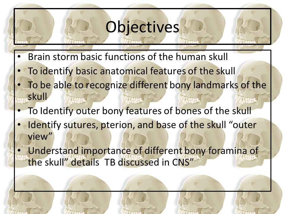 Objectives Brain storm basic functions of the human skull