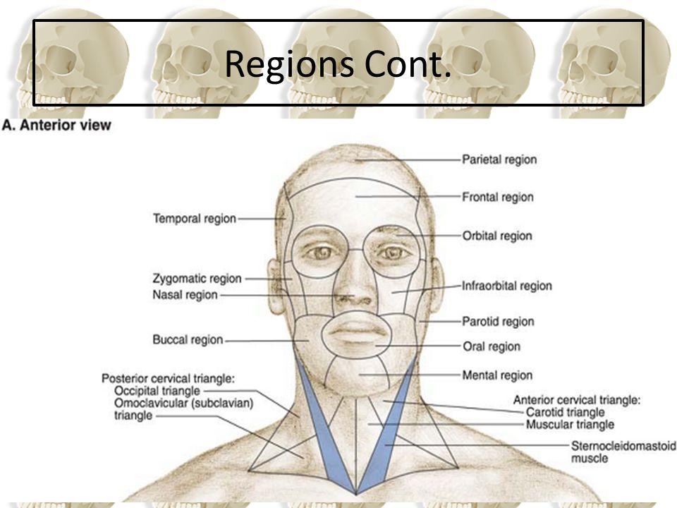 Regions Cont.