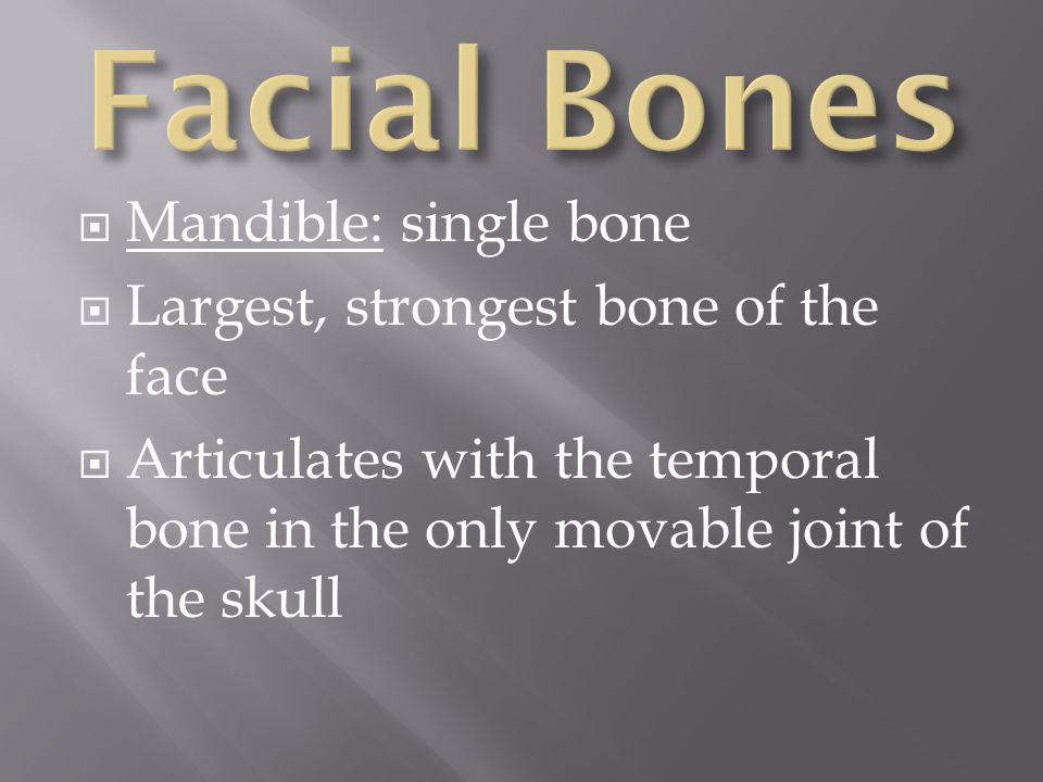Facial Bones Mandible: single bone Largest, strongest bone of the face