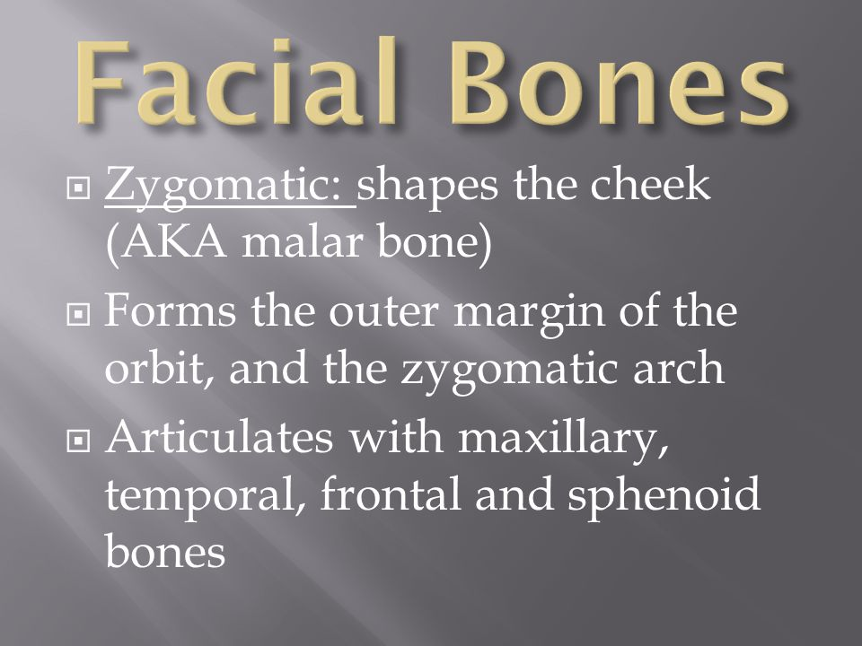 Facial Bones Zygomatic: shapes the cheek (AKA malar bone)