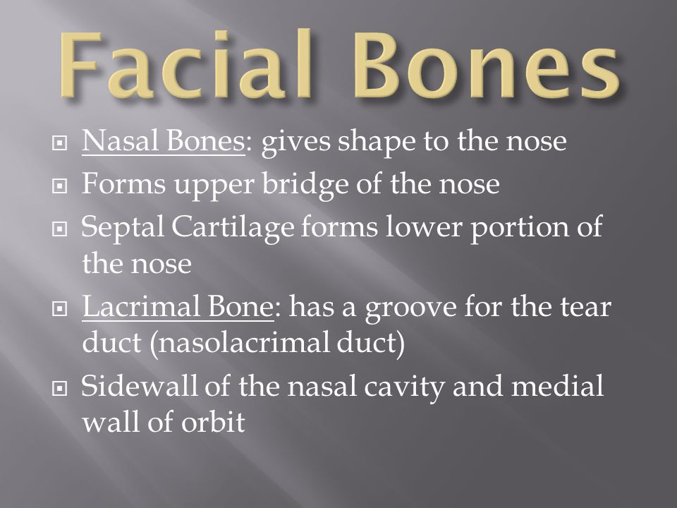 Facial Bones Nasal Bones: gives shape to the nose