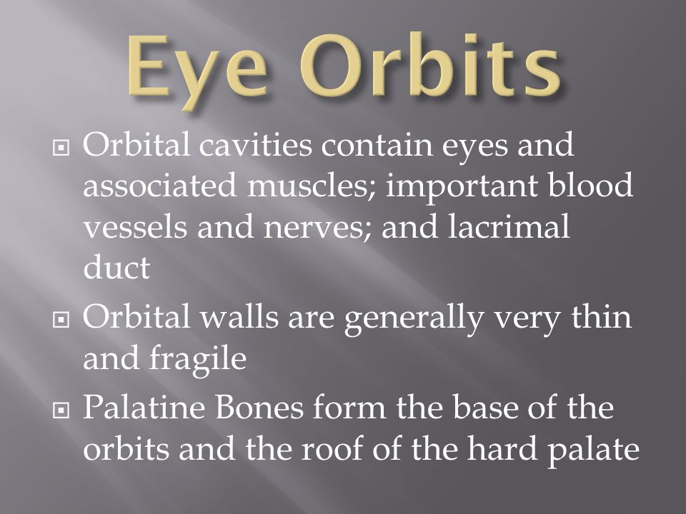 Eye Orbits Orbital cavities contain eyes and associated muscles; important blood vessels and nerves; and lacrimal duct.