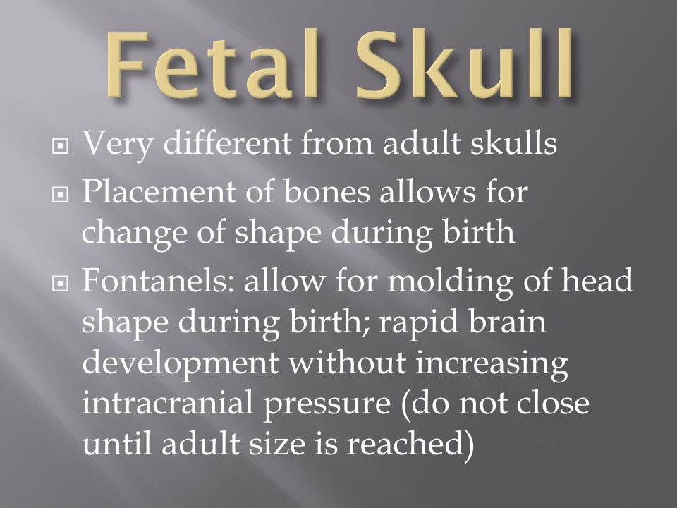 Fetal Skull Very different from adult skulls