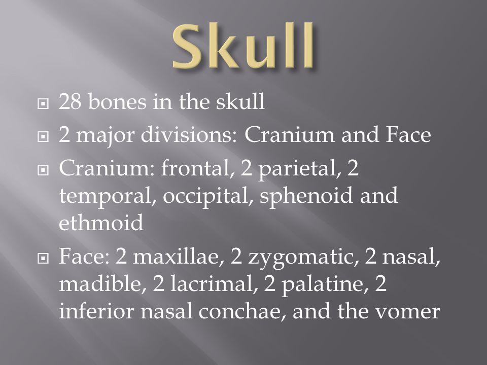 Skull 28 bones in the skull 2 major divisions: Cranium and Face