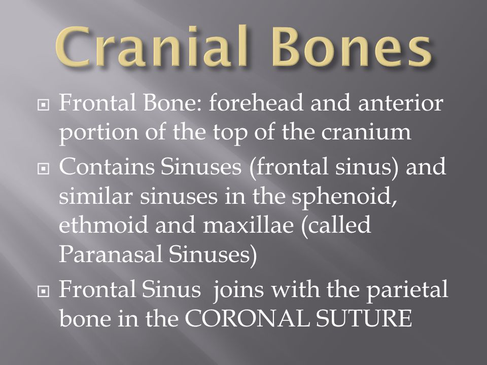 Cranial Bones Frontal Bone: forehead and anterior portion of the top of the cranium.