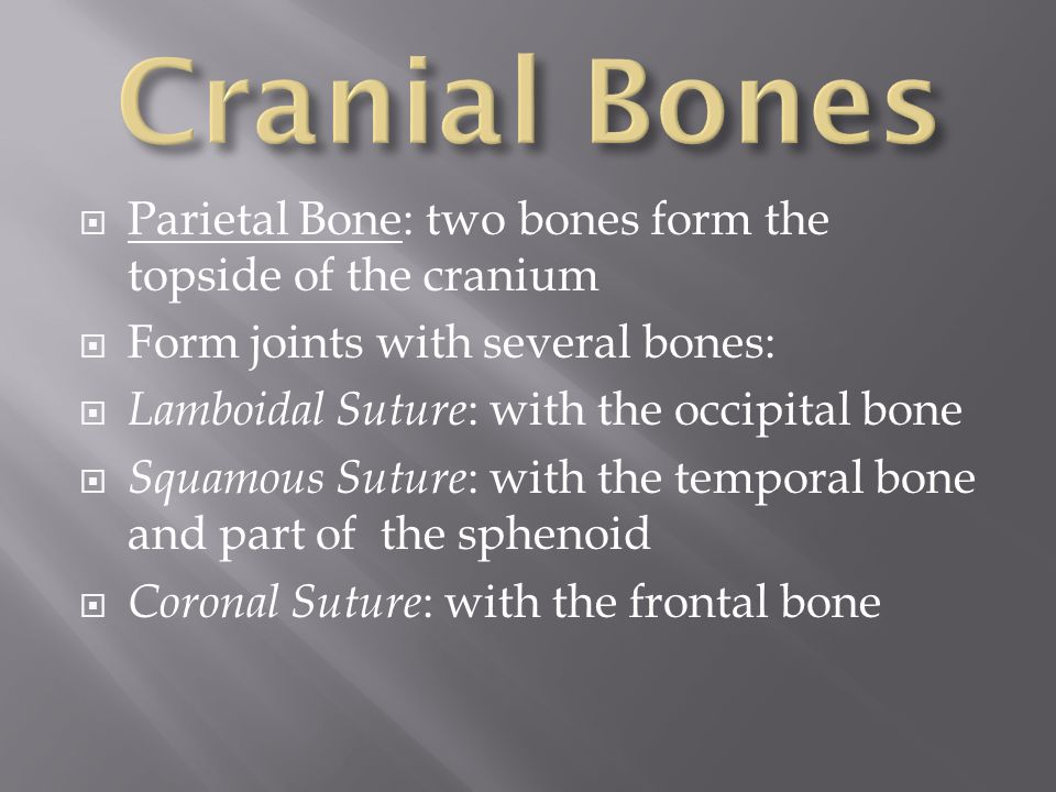 Cranial Bones Parietal Bone: two bones form the topside of the cranium