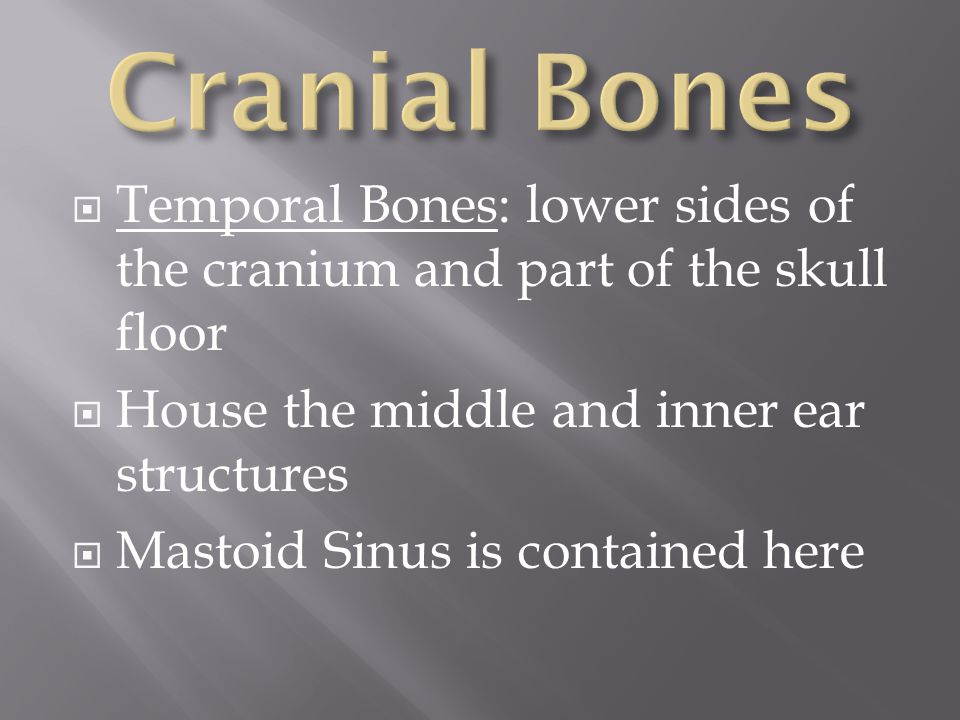 Cranial Bones Temporal Bones: lower sides of the cranium and part of the skull floor. House the middle and inner ear structures.