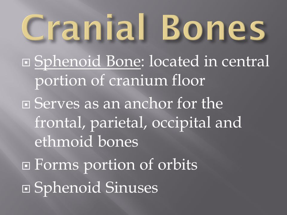 Cranial Bones Sphenoid Bone: located in central portion of cranium floor. Serves as an anchor for the frontal, parietal, occipital and ethmoid bones.