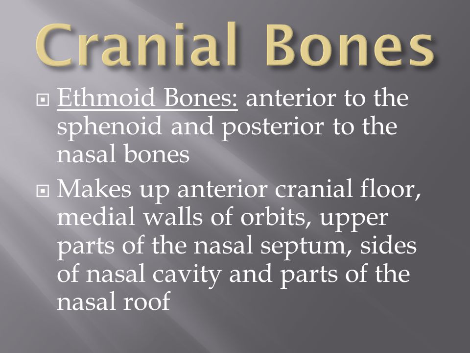 Cranial Bones Ethmoid Bones: anterior to the sphenoid and posterior to the nasal bones.