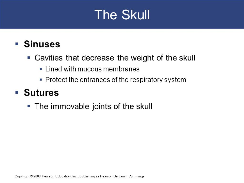 The Skull Sinuses Sutures
