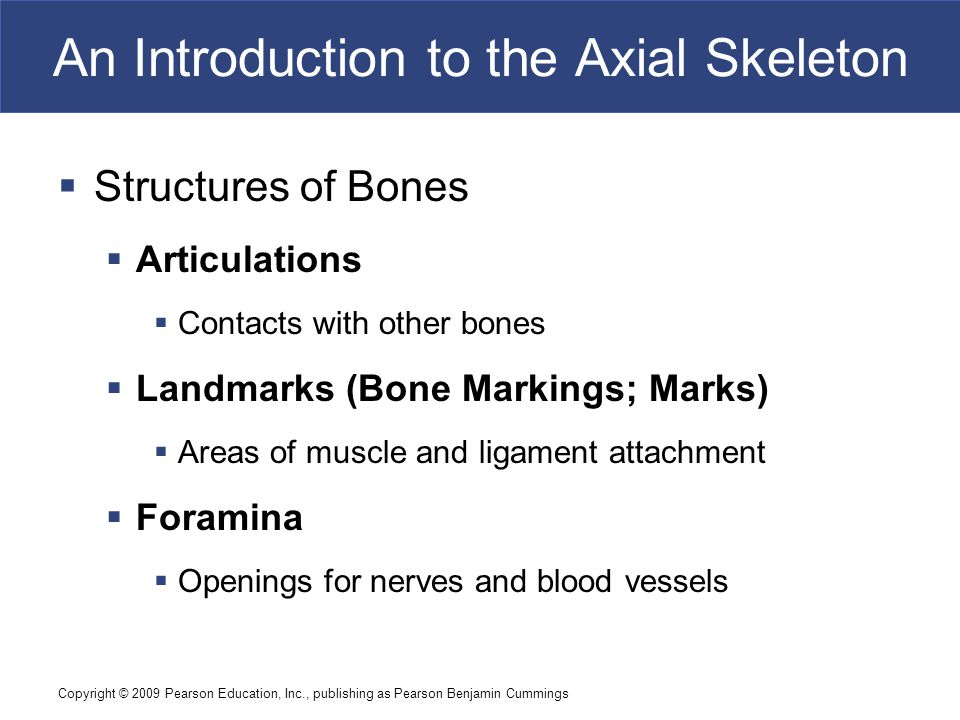 An Introduction to the Axial Skeleton