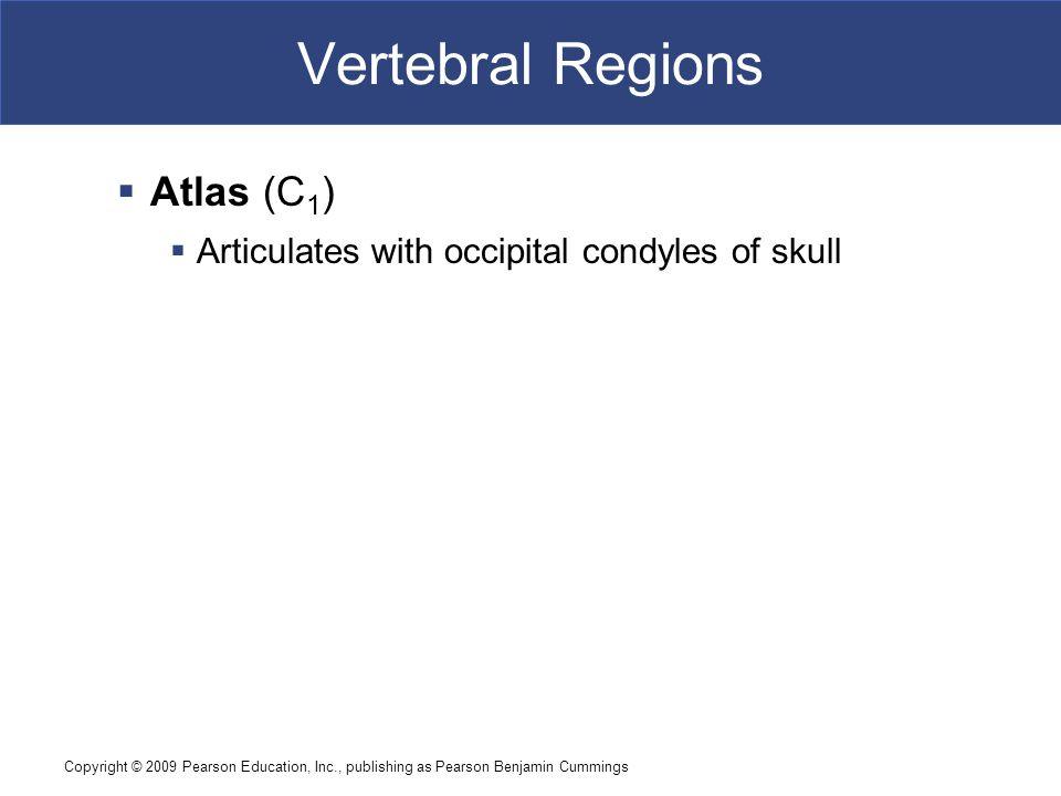 Vertebral Regions Atlas (C1)