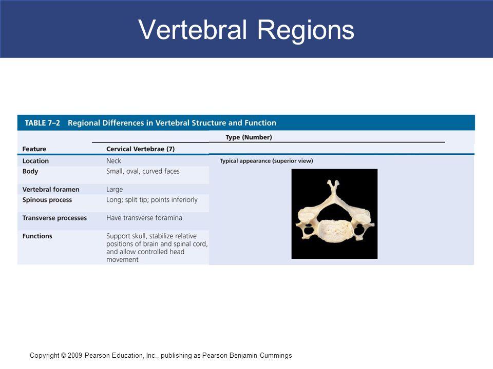 Vertebral Regions Copyright © 2009 Pearson Education, Inc., publishing as Pearson Benjamin Cummings