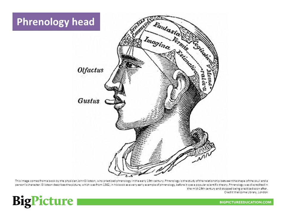 Phrenology head BIGPICTUREEDUCATION.COM