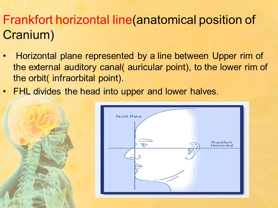 Frankfort horizontal line(anatomical position of Cranium)
