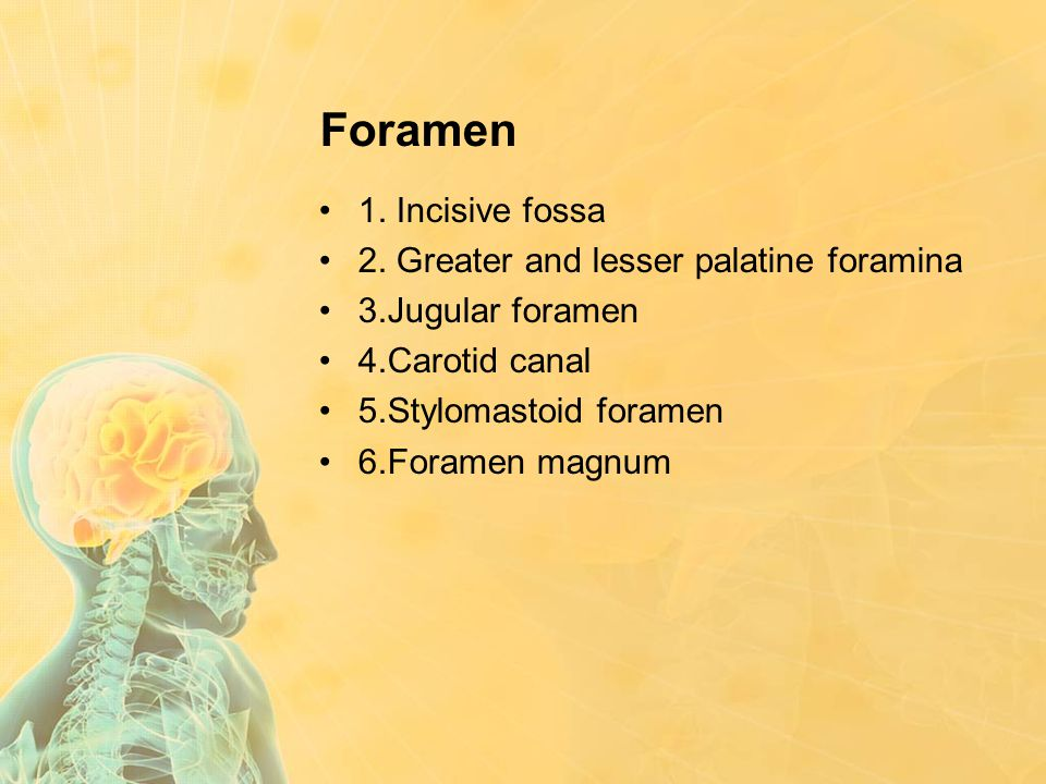 Foramen 1. Incisive fossa 2. Greater and lesser palatine foramina