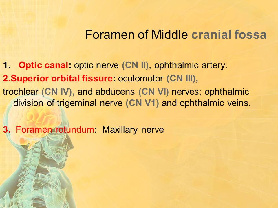 Foramen of Middle cranial fossa