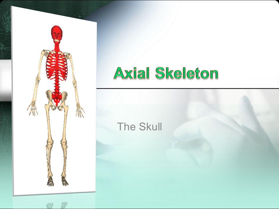 Axial Skeleton The Skull