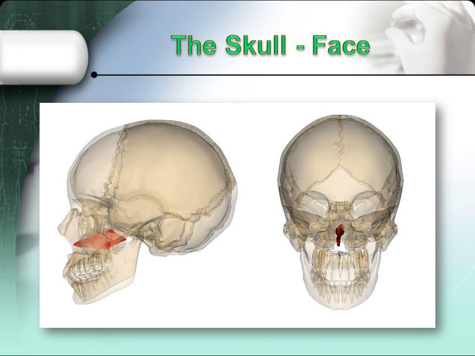 The Skull - Face