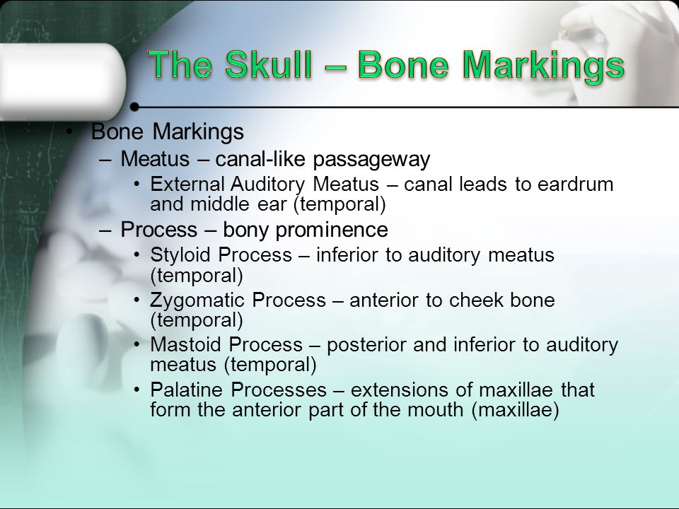 The Skull – Bone Markings