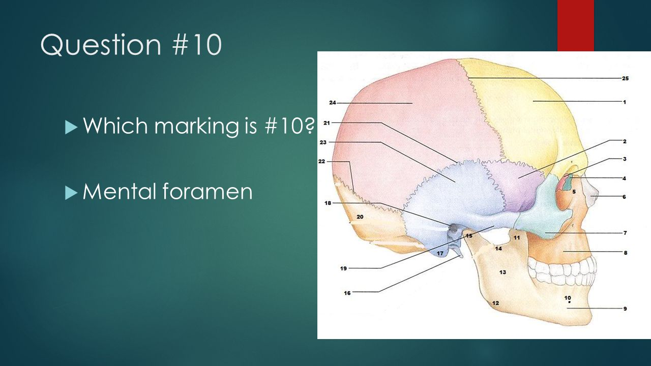 Question #10 Which marking is #10 Mental foramen