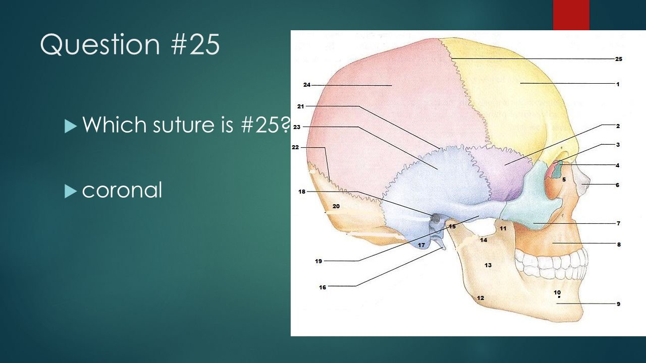 Question #25 Which suture is #25 coronal