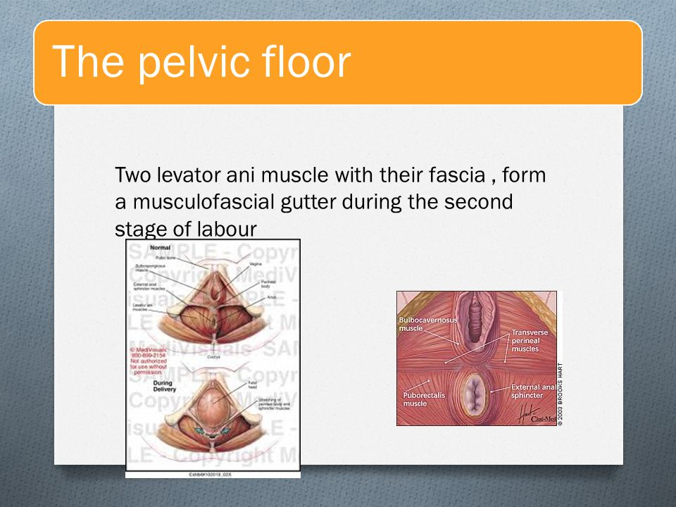 The pelvic floor Two levator ani muscle with their fascia , form a musculofascial gutter during the second stage of labour.